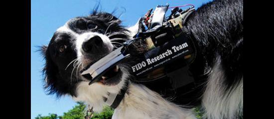 Perro muerde el dispositivo FIDO durante pruebas